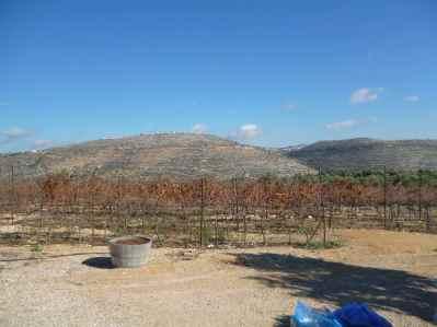 Gvaot Winery Vineyards 2