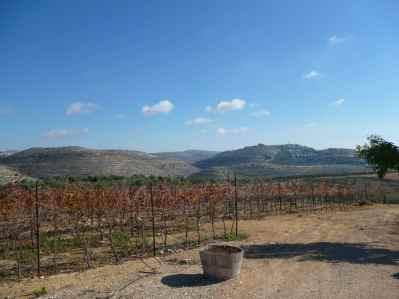 Gvaot Winery Vineyards
