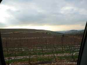 Har Bracha Vineyards 2