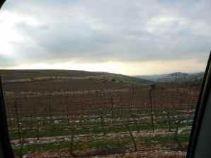 Har Bracha Vineyards 2