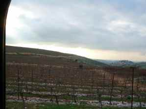 Har Bracha Vineyards 3