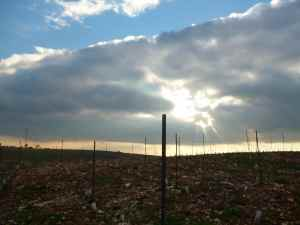Har Bracha Vineyards 5