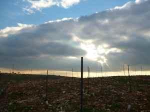Har Bracha Vineyards 5