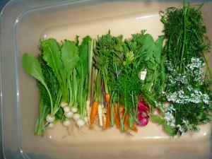 Mini greens, vegetables, and flowers - beautiful!