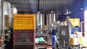 Tura Wine cellar