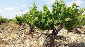 Vitkin Old Vines Petite Sirah 2015