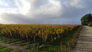 chateau-lascombes-vineyards