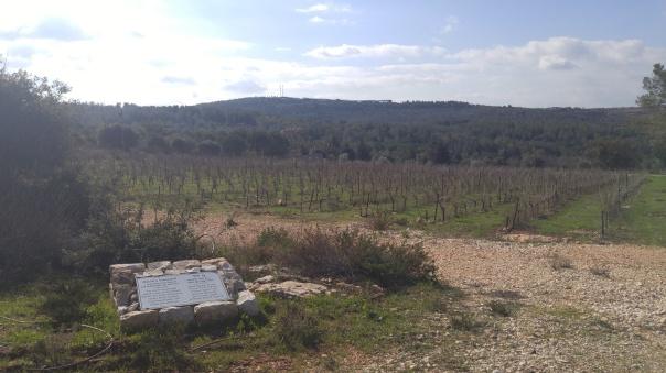 davids-vineyard-outside-of-kishor-winery-tatsing-room