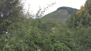 Hills of Mosel 4