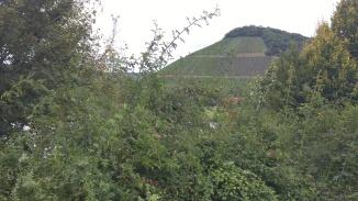 Hills of Mosel 4