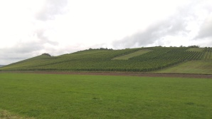 Hills of Mosel 5