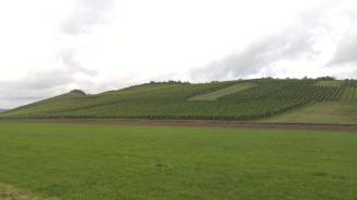 Hills of Mosel 5